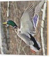Ducks Take Off II Wood Print