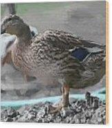 Ducks Wild Wood Print