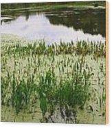 Duckweed Reflection Wood Print