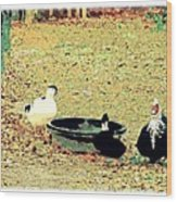 Ducky Afternoon Wood Print