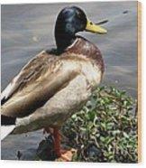 Ducky Duck Wood Print