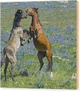Dueling Mustangs Wood Print