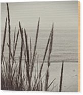 Dune Grass In Early Spring Wood Print