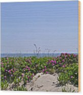 Dune Roses Wood Print