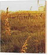Dunes And Seaoats  Wood Print