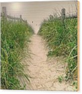 Dunes Catch Light Wood Print by Diana Angstadt