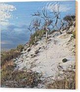 Dunes Of Santa Rosa Island Wood Print