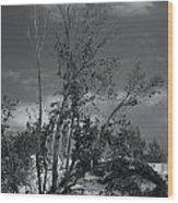 Dunes Tree Bw Wood Print