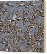 Dunlins In Flight Wood Print