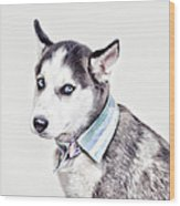 Duoduo The Husky Wood Print