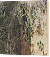 Dusky-headed Parakeets Wood Print