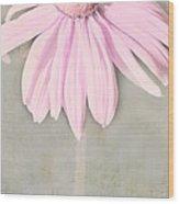 Dusky Pink Coneflower Wood Print