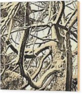Snow Dusted Limbs Wood Print