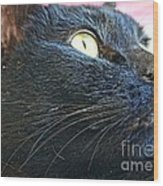 Dusty Black Cat Wood Print