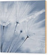 Dusty Blue Dandelion Clock And Water Droplets Wood Print