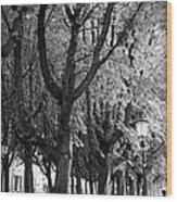 Dutch City Trees - Black And White Wood Print