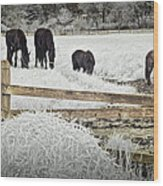 Dutch Friesian Horses Behind A Wooden Fence In A Pasture Wood Print