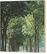 Dutch Landscape - Country Road Wood Print
