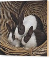 Dutch Rabbit With Young Wood Print by E A Janes