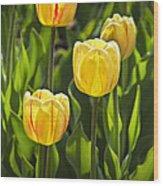 Dutch Yellow Tulip Flowers On Windmill Island In Holland Michigan Wood Print