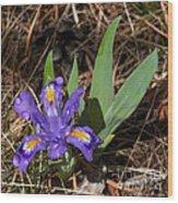 Dwarf Lake Iris Wood Print