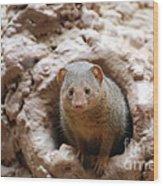 Dwarf Mongoose  Wood Print