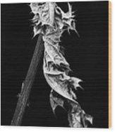 Dying Leaf Wood Print