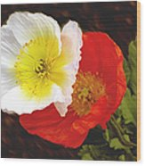 Eager Poppies Wood Print