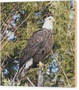 Eagle 1979 Wood Print