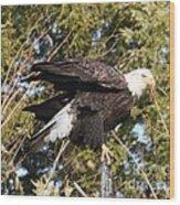 Eagle 1982 Wood Print