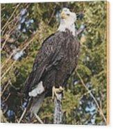 Eagle 1985 Wood Print