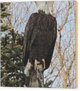Eagle 1991a Wood Print