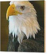 Eagle 3 Wood Print