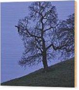 Eagle And The Oak Wood Print