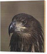 Eagle Beauty Wood Print