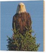 Eagle Eye Wood Print