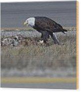 Eagle Feeding Wood Print