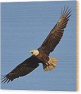 Eagle Flight 5 Wood Print