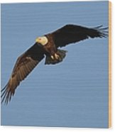Eagle Flight 6 Wood Print
