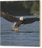 Eagle In Action Series Wood Print