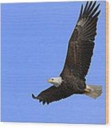 Eagle In Flight Wood Print