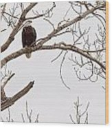 Eagle In Tree Wood Print