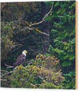 Eagle In Trees  Wood Print