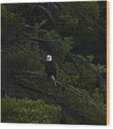 Eagle In White Pine Wood Print