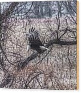 Eagle Landing 1 Wood Print