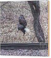 Eagle Landing 2 Wood Print