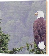 Eagle Looking For Breakfast On A Misty Morning Wood Print