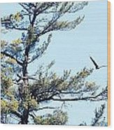 Eagle Nest Wood Print