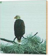 Eagle On A Frozen Pine Wood Print by Jeff Swan