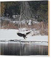 Eagle On The Shoreline Wood Print